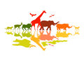 Wildlife safari wild animals vector illustration Royalty Free Stock Image