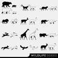 Wildlife vector series set of animals Stock Photo