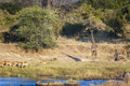Wildlife at the waterhole giraffe and impalas in africa Stock Photo