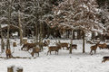 Wildlife in winter forest Royalty Free Stock Images