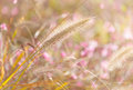 Wildness grass field during sunset Royalty Free Stock Images