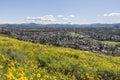 Wildwood regional park in thousand oaks california springtime bush sunflower wildflower field above the los angeles suburb of Royalty Free Stock Photos