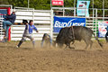 Willits Frontier Days Rodeo Royalty Free Stock Images