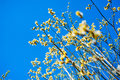 Willow branch with flowers against a blue sky Stock Image