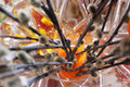 Willow branches with catkins in glass vase