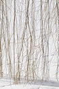 Willow branches on frozen pond Stock Photo