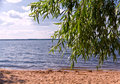 Willow coast lake morning view of the tree at the sandy of the seliger russia with a beach water surface with waves and sky with Stock Photography