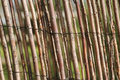 Willow fencing Royalty Free Stock Photo