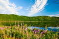 The willow herb and lake