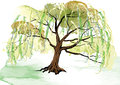 Willow tree on the ground landscape design watercolor look created with brush vector illustration Royalty Free Stock Photos