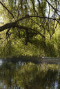 Willow tree a hanging over a pond Royalty Free Stock Images
