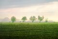 Willow tree in an open field with blue sky and clouds Royalty Free Stock Photo