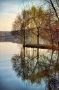 Willow tree reflecting on lake water. Serene autumn scene Royalty Free Stock Photo