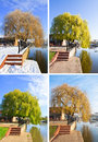 Willow tree set Stock Photo