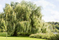 Willow tree at the side of a river Royalty Free Stock Photo
