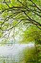 The willow tree trees along river Royalty Free Stock Photos