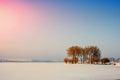 Willows near the frozen lake Royalty Free Stock Photo