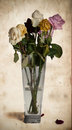 Wilted roses in vase dying mixed Royalty Free Stock Photos