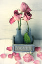 Wilted roses in vase rustic and fallen petals on wooden background vintage and film stylized image grainy shallow dof Stock Images