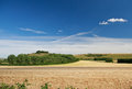 Wiltshire landscape united kingdom field and forests Royalty Free Stock Photos