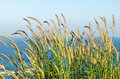 Wind blowing through flower grass Royalty Free Stock Photo