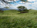 Wind blowing hard on the south coast of maui grass and trees bend of the force of the Stock Photography