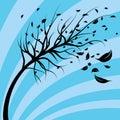 Wind Blown Tree Royalty Free Stock Photo