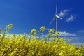 Wind farm and rape (canola) field. Spring flowers background and blue sky Royalty Free Stock Photo