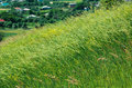 Wind Of Green Summer Meadow. R...