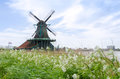 Wind mills with flower in Zaanse Schans Royalty Free Stock Photo