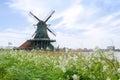 Wind mills with flower in Zaanse Schans Royalty Free Stock Photo