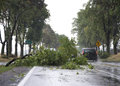 Wind Storm Damage Royalty Free Stock Photo