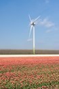 Wind turbine behind a field of red tulips Royalty Free Stock Photos
