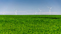 Wind turbine in crop field Royalty Free Stock Photo