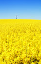 Wind turbine rapeseed field Royalty Free Stock Image