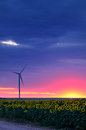 Wind turbine at sunset in sun flower field Royalty Free Stock Image