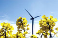 Wind turbine, yellow field. Stock Photo