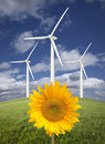 Wind Turbines Against Sky with Bright Sunflower Royalty Free Stock Photo