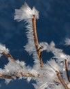 Wind of winter Stock Photo
