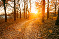 Winding Countryside Road Path Walkway Through Autumn Forest. Sun Royalty Free Stock Photo