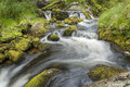 Winding creek Royalty Free Stock Photo