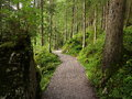 Winding path in lush green forest Royalty Free Stock Photo