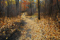 Winding hiking trail in late autumn forest Royalty Free Stock Photo