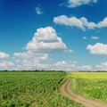 Winding road and blue sky in sunflower fields clous on Stock Image