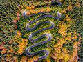 Winding Road surrounded by a colourfull trees in the forest Royalty Free Stock Photo