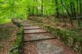 Winding stone steps with foliage horizontal Royalty Free Stock Photo