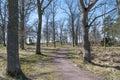 Winding walkway at springtime Royalty Free Stock Photo