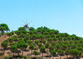 Windmill above a plantation of trees on farm with its sails or vanes visible against the blue sky Stock Photos