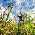 Windmill in corn Royalty Free Stock Photos