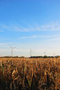 Windmill farm for renewable electric energy production